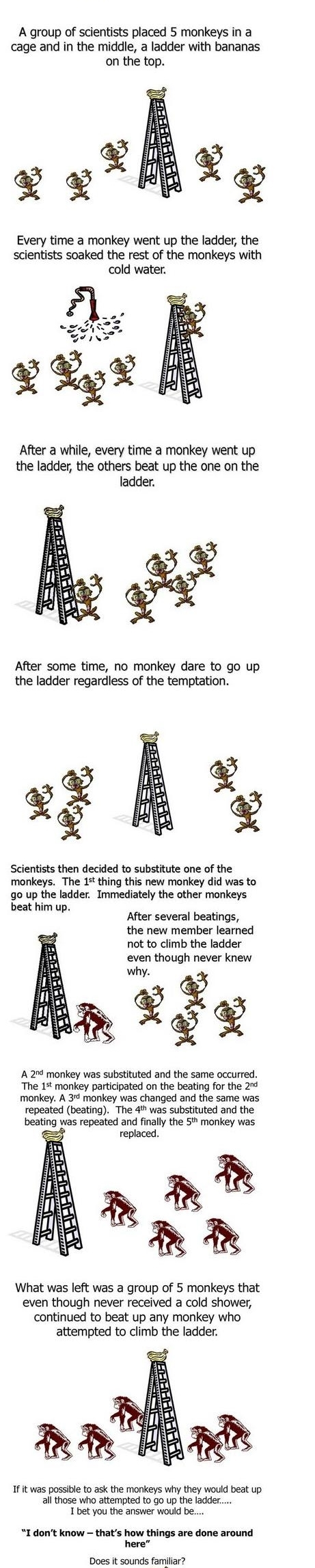 Interesting Facts- Five Monkeys Theory (Wet Monkey Theory)-crop-crop